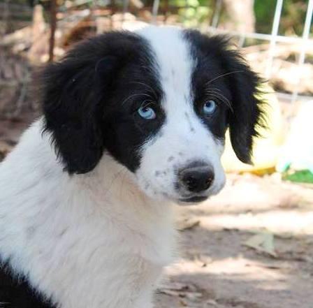 Tierschutzverein Santorini Ev Wir Sind Aktiv Im Tierschutz Auf