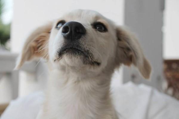 Tierschutzverein Santorini E V Wir Sind Aktiv Im Tierschutz Auf Der Griechischen Insel Santorin